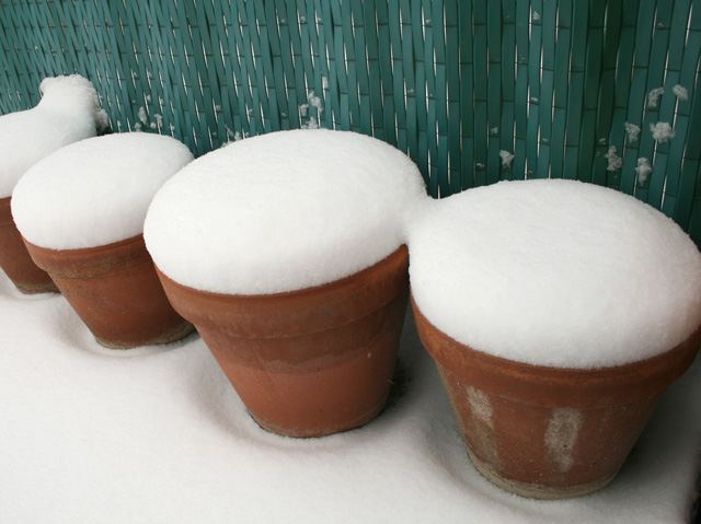 gros pots sous la neige